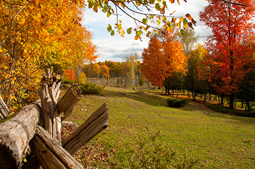 Tips for Fall Photography
