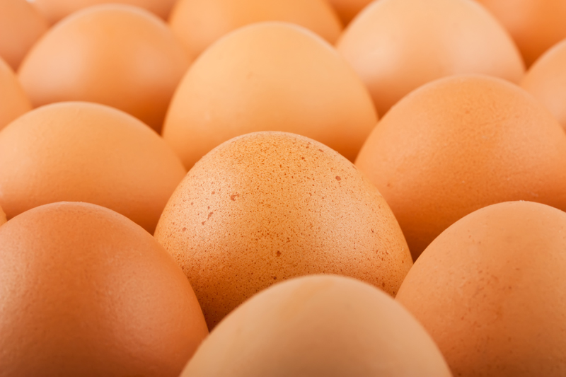 EGG-zactly: Great myth buster info