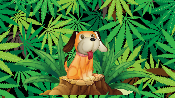 Are we going to 'the dogs' with Cannabis legalization?