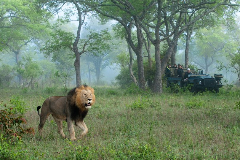 Looks like 'Karma' intervened during a poaching attempt in Africa